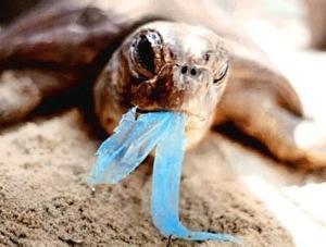 Ilha de Plástico - Lixo em Alto Mar